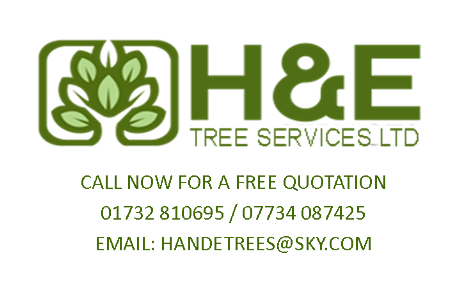 H and E Tree Services Ltd