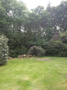 tree-removal-after (1)
