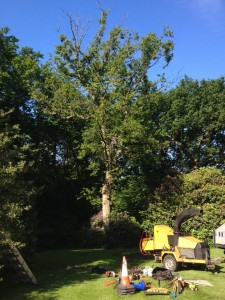 tree-removal-before (1)